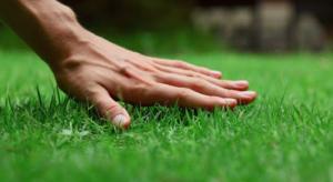 трава против сорняков