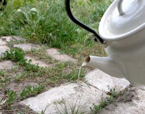 кипяченая вода против сорняков