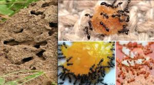 эффективная борьба с муравьями